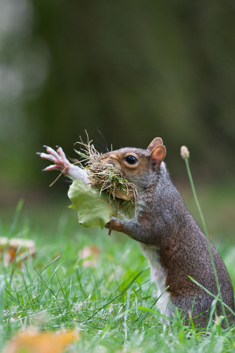 Photograph Squirrel and the Grassy Mouth. by Max Brown on 500px