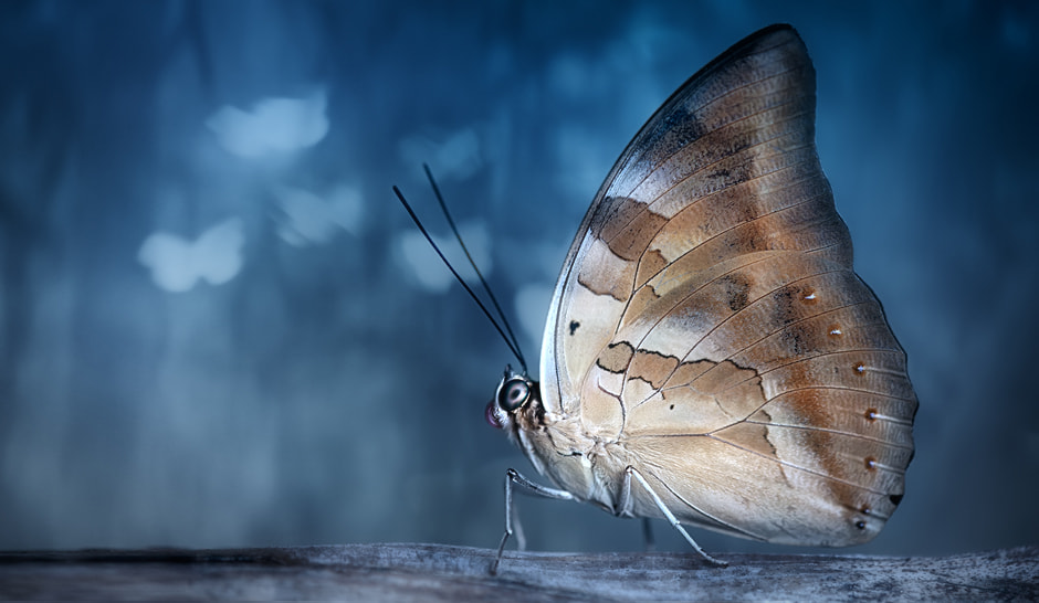 Photograph Butterfly Effect by Erhan Kahraman on 500px