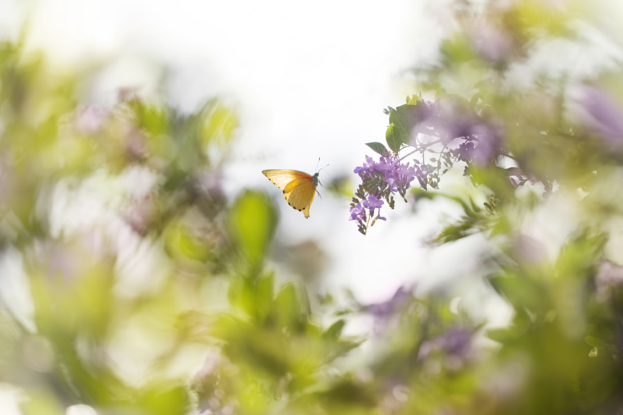 Fly away by Lee Peiling on 500px.com