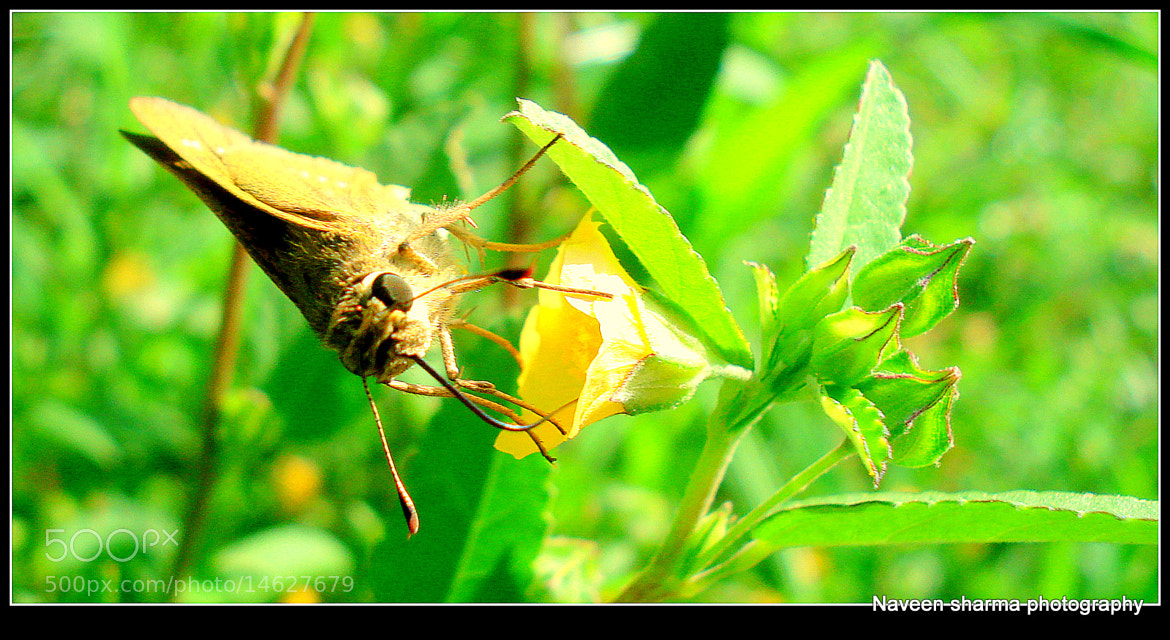 Photograph MOTH N ITS FAVORITE DESTINATION by naveen sharma on 500px