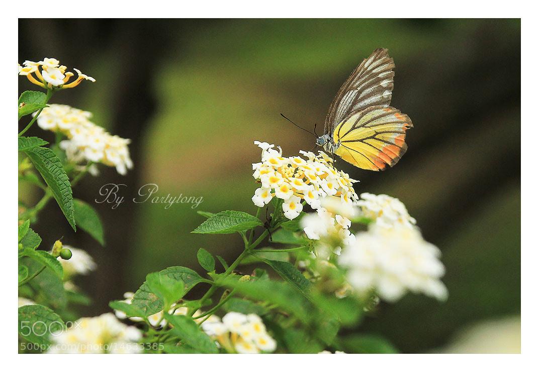 Photograph Butterfly2 by PT Sabayjaiphoto on 500px