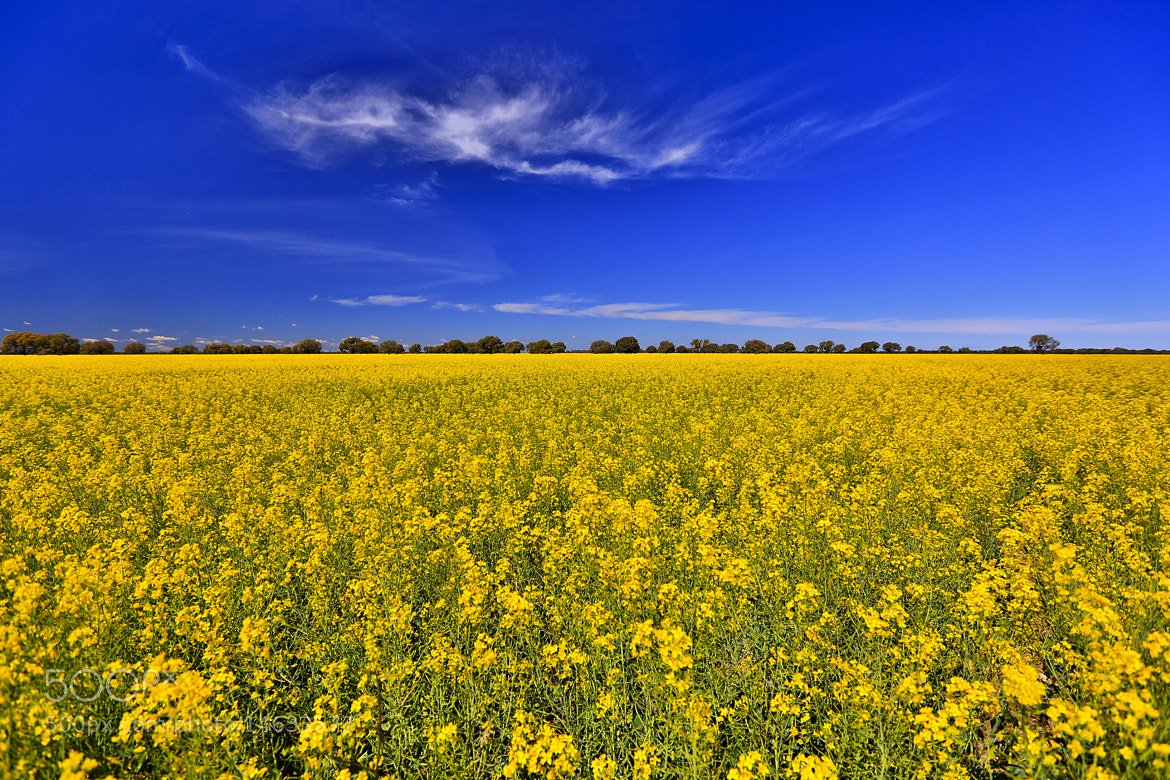 Photograph Fields Of Gold by Jamie Condon on 500px