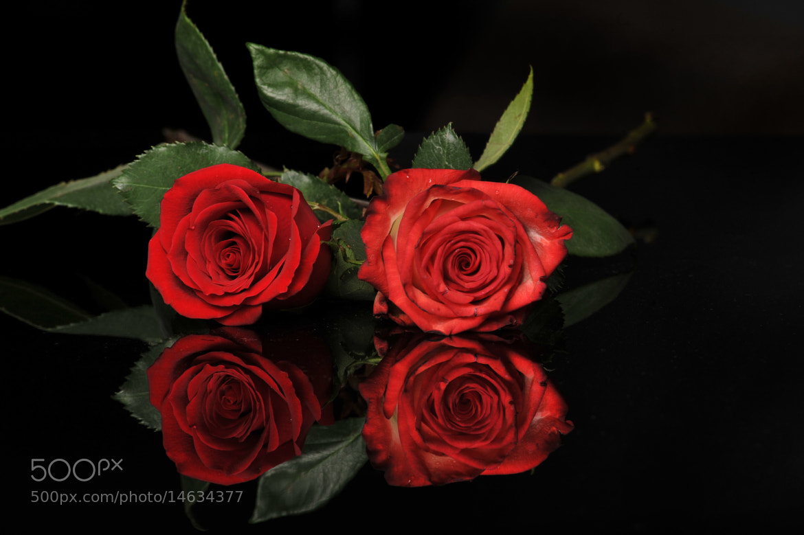 Photograph Copule or Red Roses by Cristobal Garciaferro Rubio on 500px
