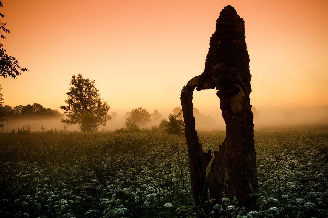Photograph Stump hole in the fog by Mindaugas Ma on 500px