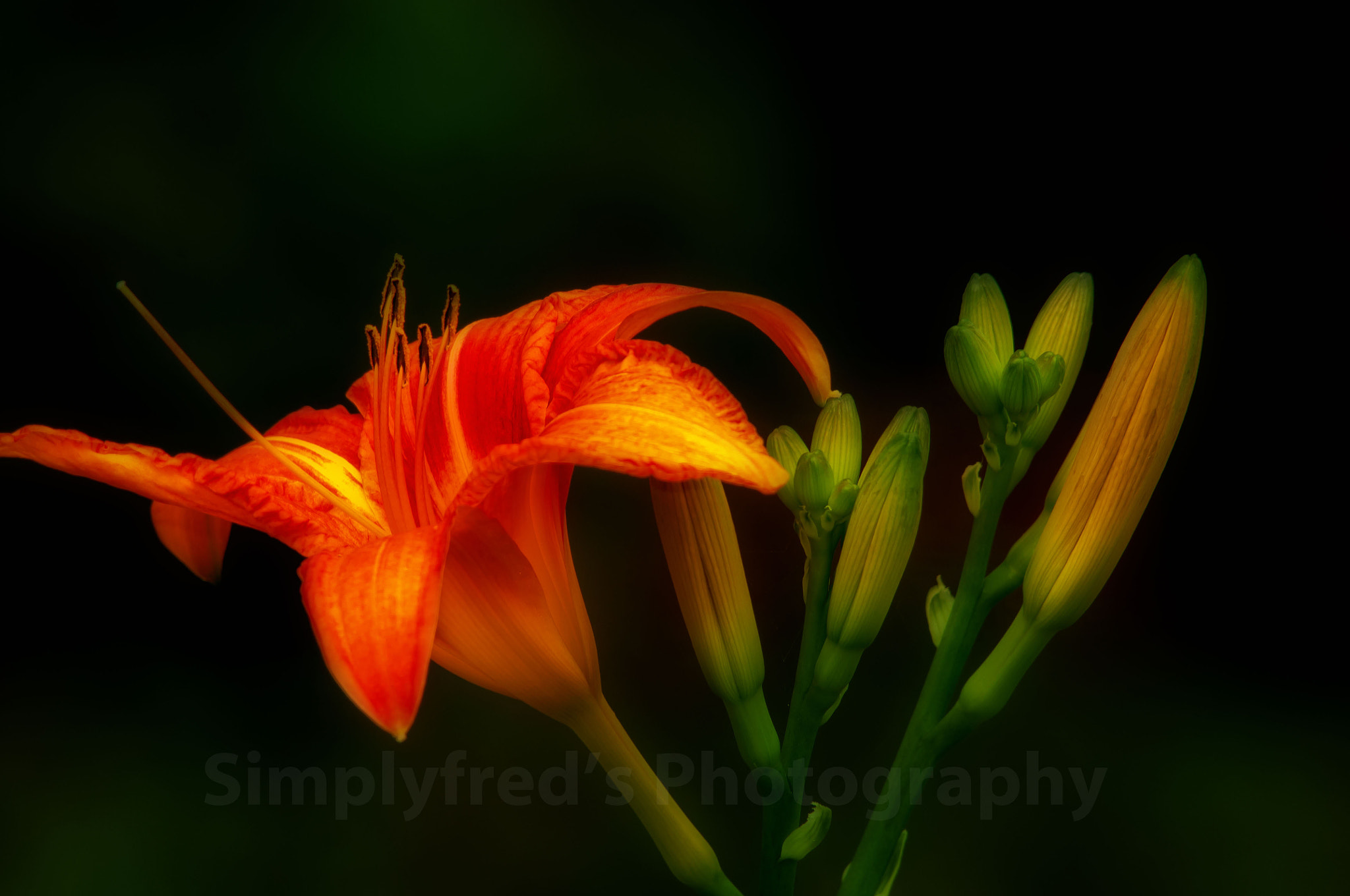 Photograph Simply Lily by Alfred Quah on 500px