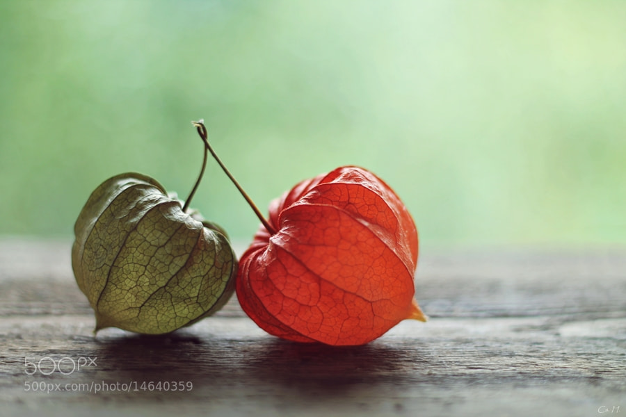 Photograph Autumn in Love by Cs. H. on 500px