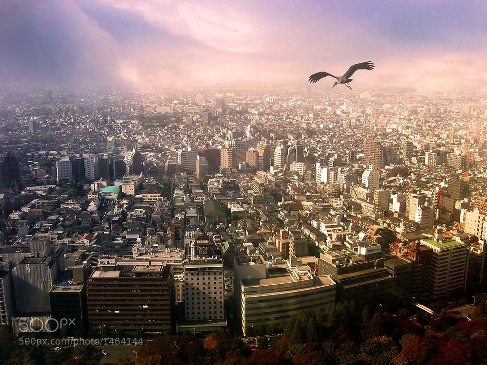 Photograph Bird eye view : Tokyo  by sumphano on 500px