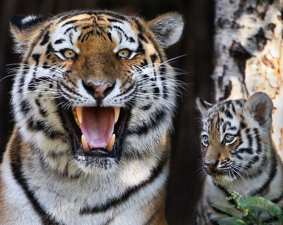 Photograph Proud Mom by Klaus Wiese on 500px