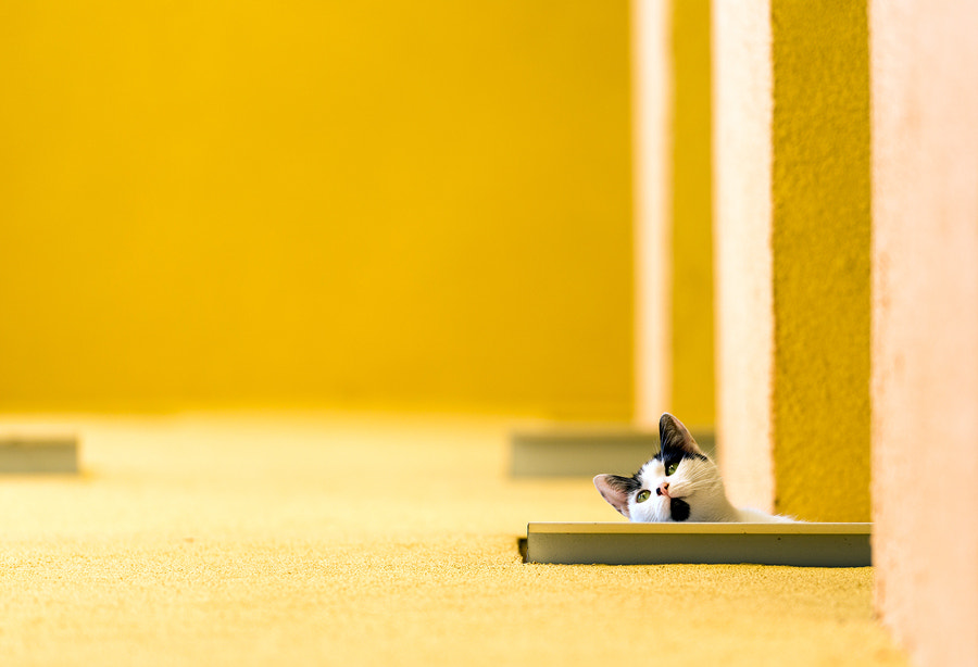 Photograph Curiosity Reloaded by MARIAN Gabriel Constantin on 500px