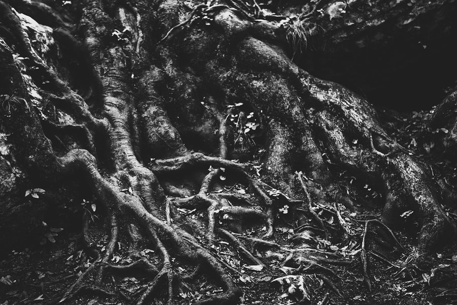 Photograph roots by Katerina SOKOVA on 500px
