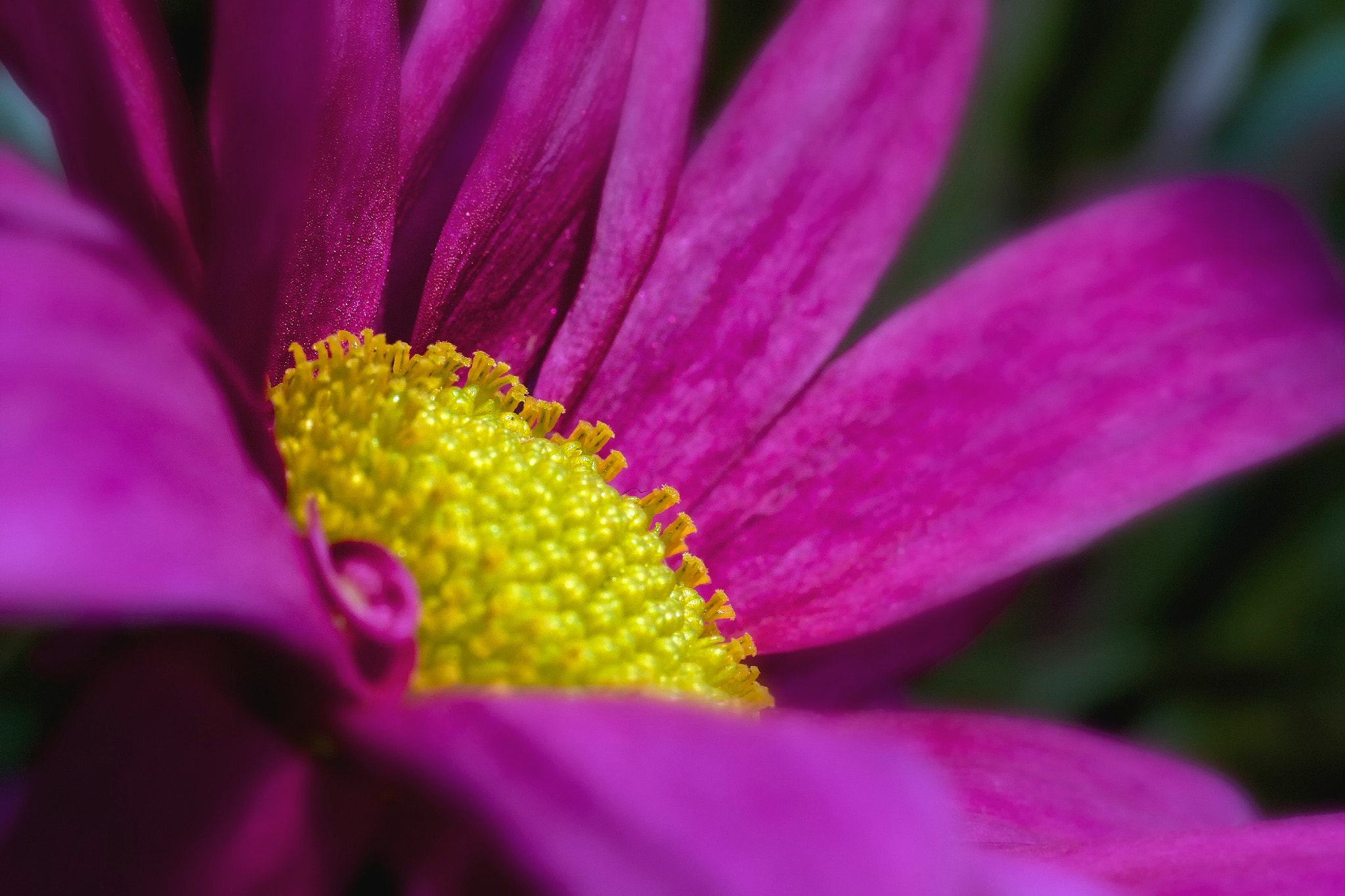 Photograph Purple, Yellow by Mike Blackburn on 500px