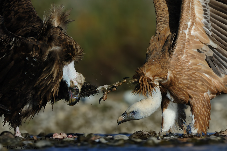 Photograph fight for bread by Murat  Demirtas on 500px