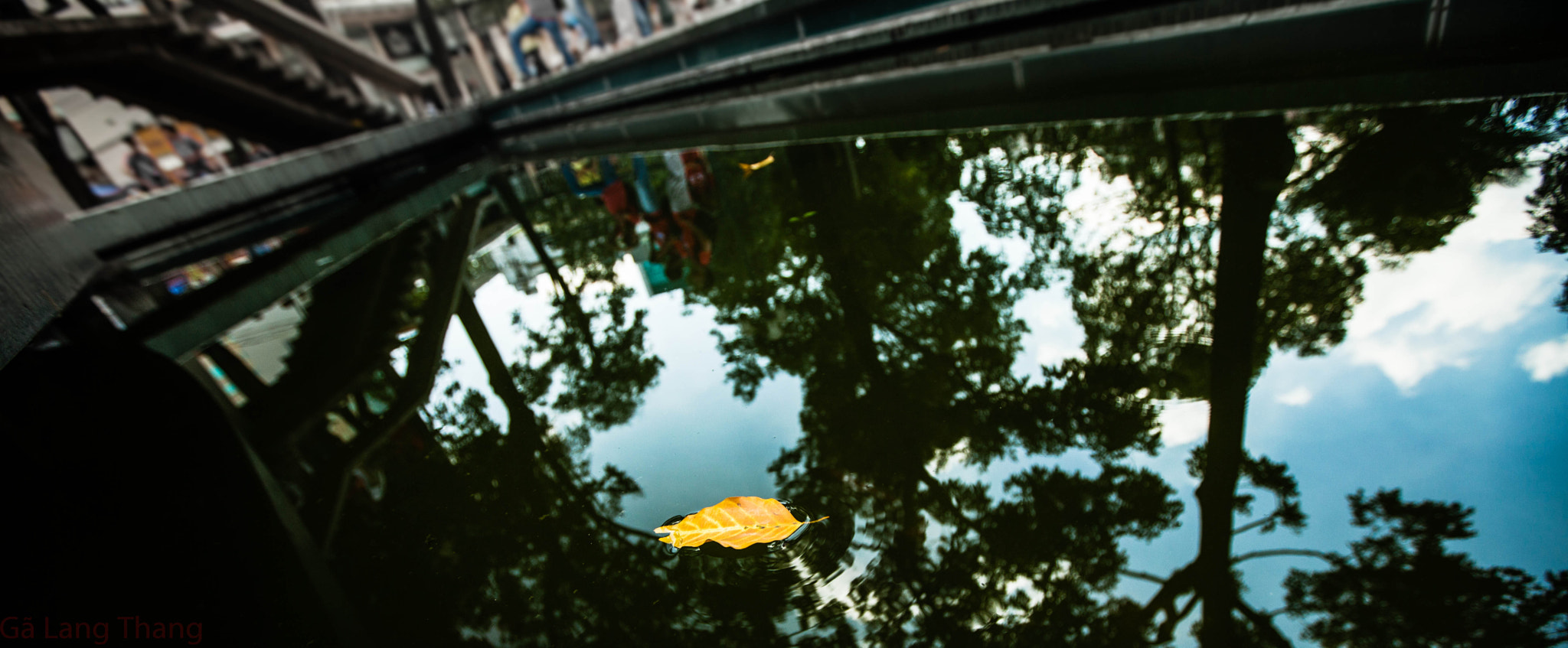 Photograph falling leaves by Tuan Phan Huy on 500px