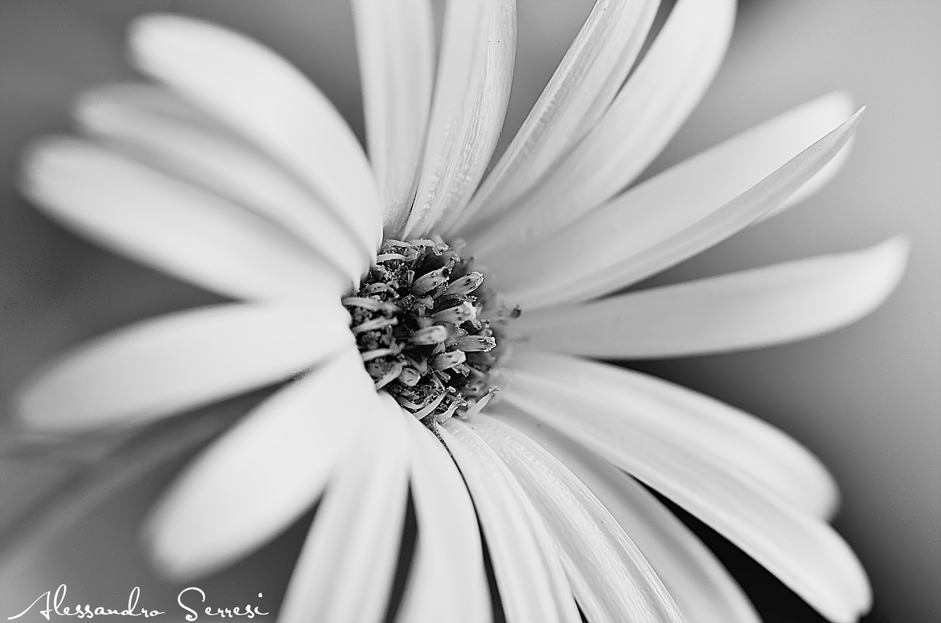 Photograph THE FLOWER by Alessandro Serresi on 500px