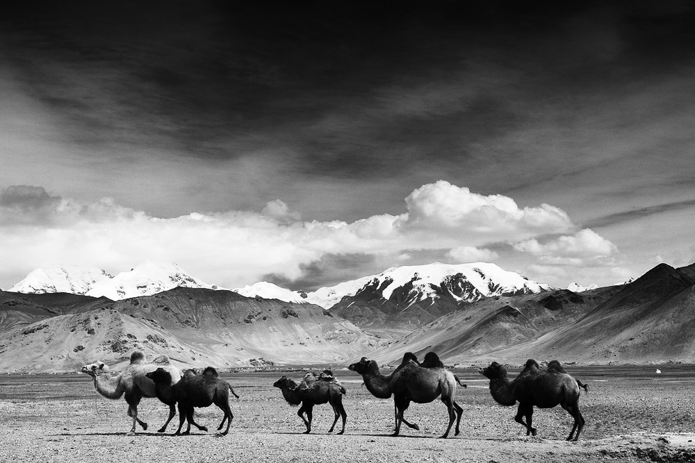 Photograph silk road by Jungle Man on 500px