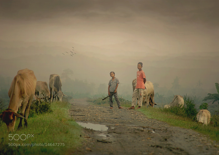 Photograph cowherd boy by Teuku Jody  Zulkarnaen on 500px