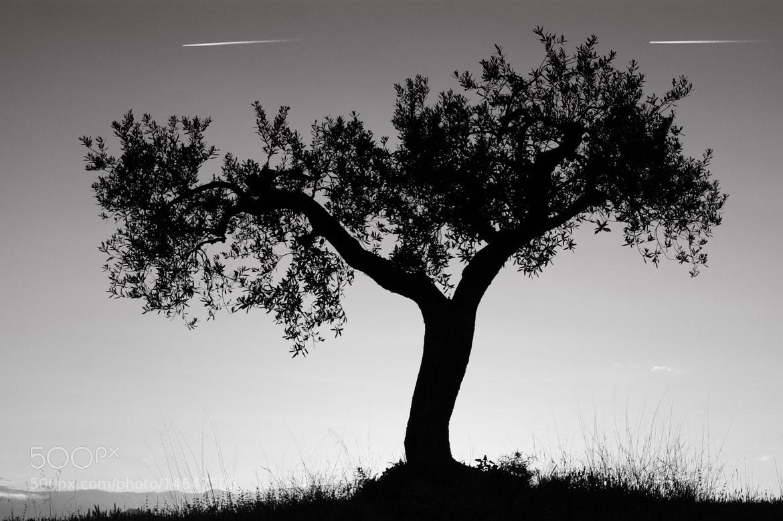 Photograph cometas by jordi  marquet on 500px