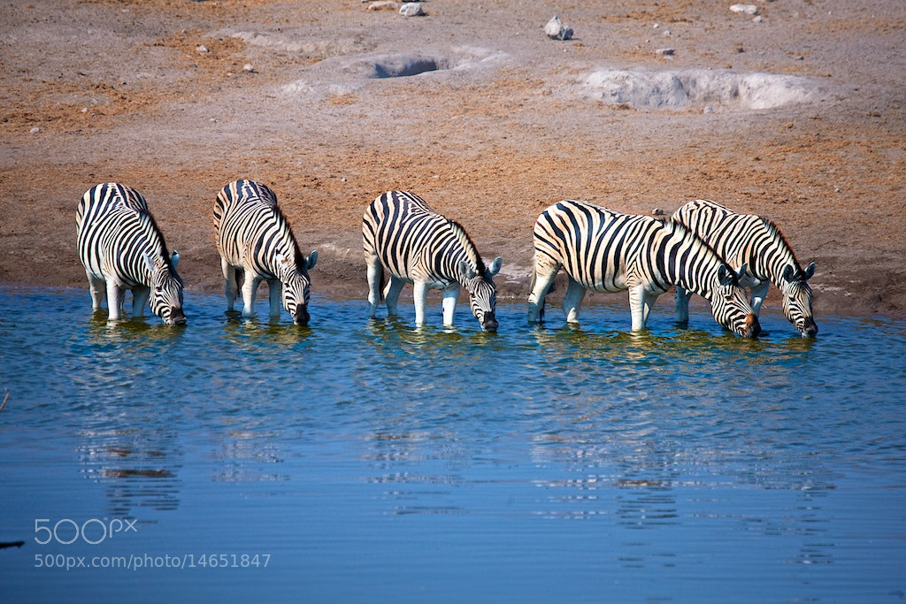 Photograph Morning watering hole by Buck Shreck on 500px