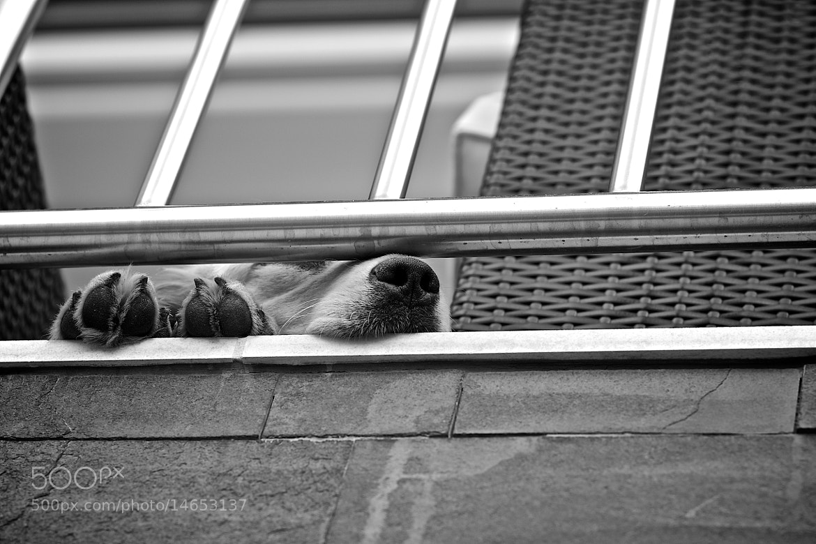 Photograph Dog minimal by Katalin Gerencsér on 500px
