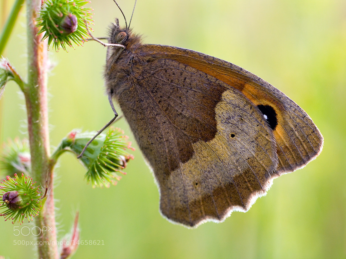 Photograph Gatekeeper by Tony Oliver on 500px