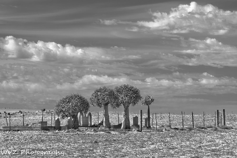 Photograph In the Karoo by Wendy Van Zyl on 500px