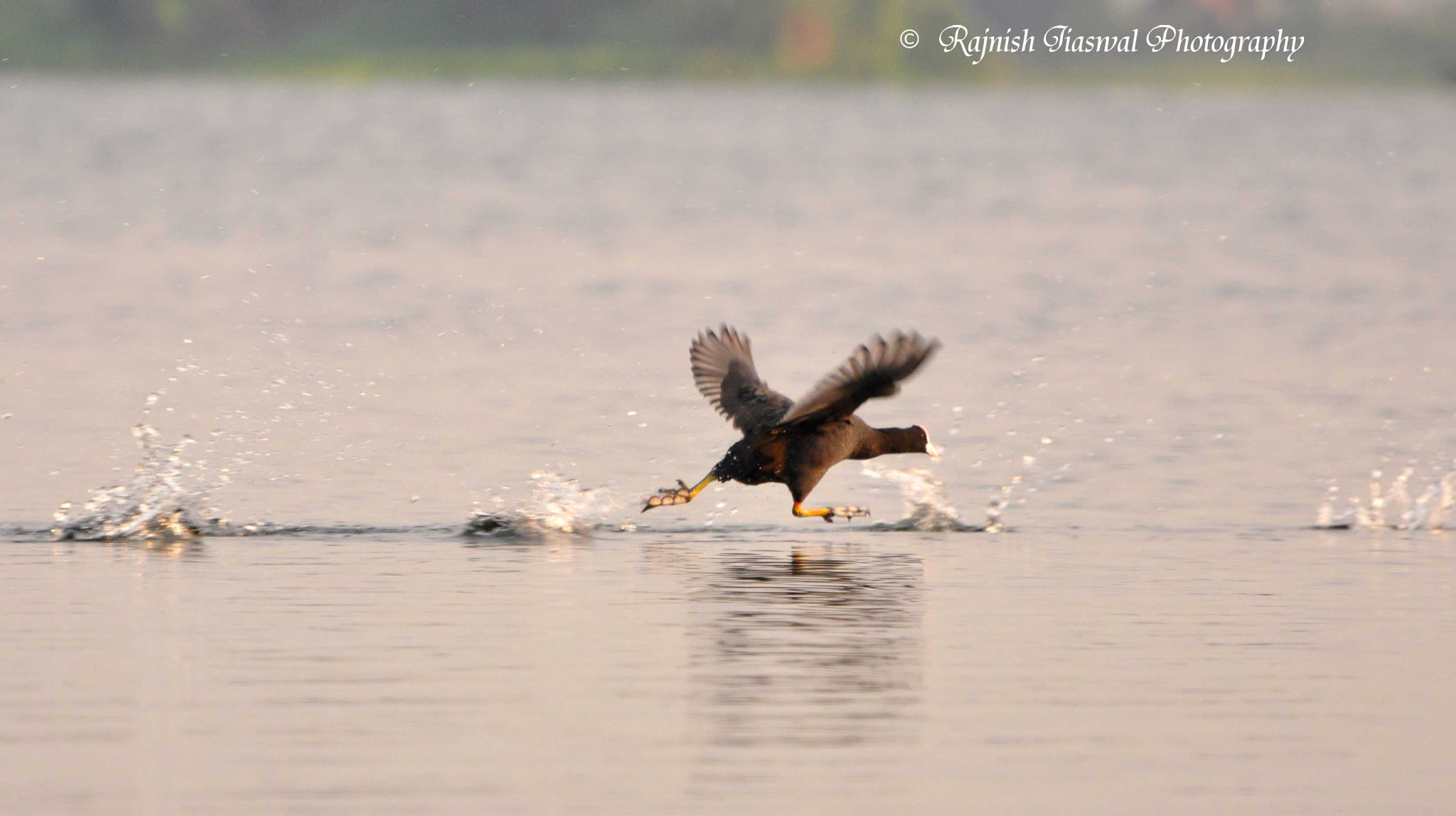 Photograph Running on water by Rajnish Jaiswal on 500px