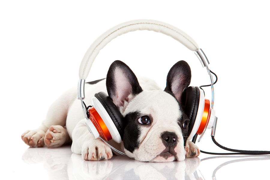 dog listening to music with headphones isolated on white backgro de Eugen Wais en 500px.com