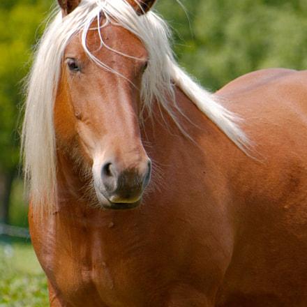 Majestic Horse - Edinburgh, Scotland
