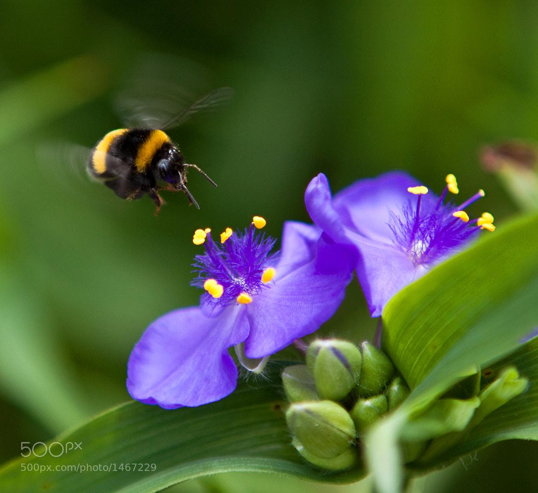 Photograph The buzz by Ada Zyborowicz on 500px
