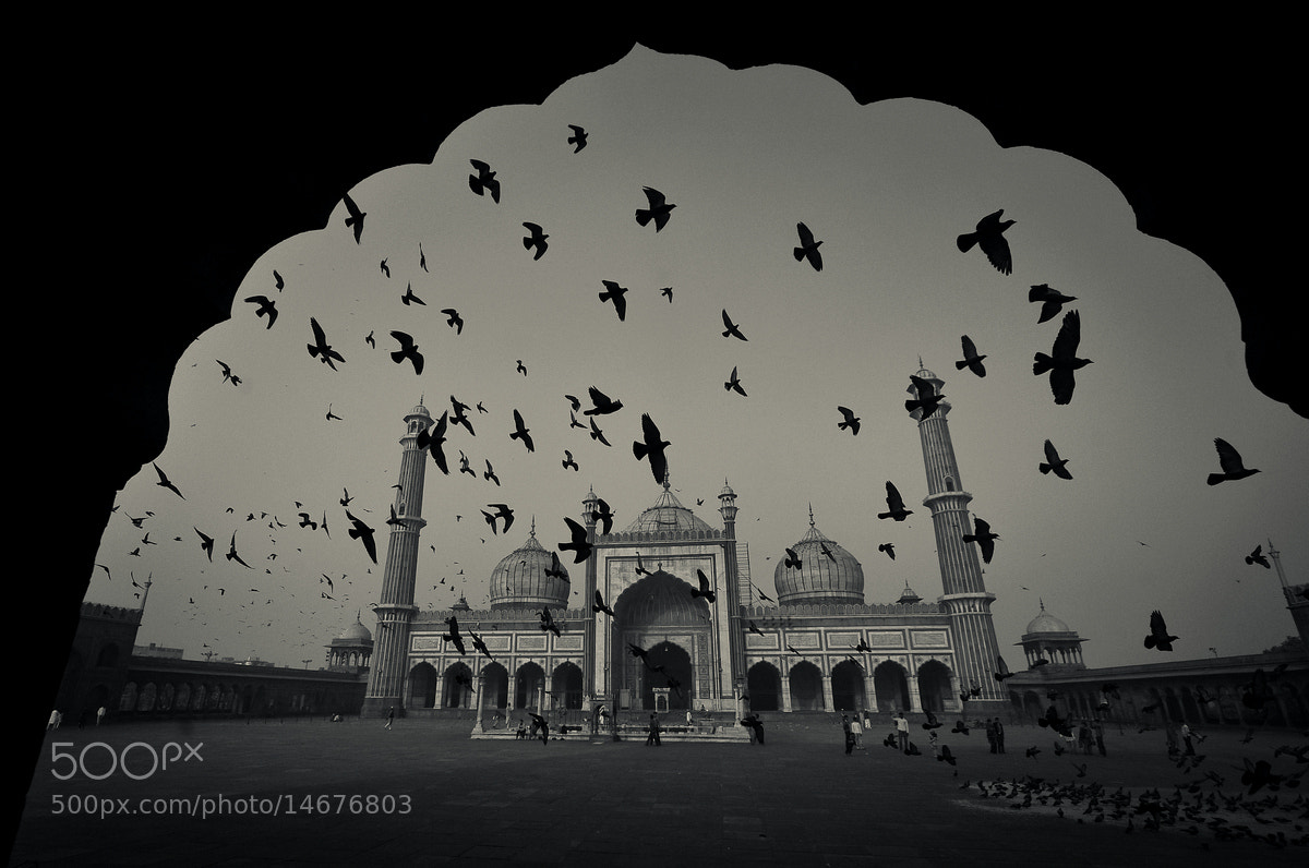 Photograph Conference of the birds by Sriram Guruswamy on 500px