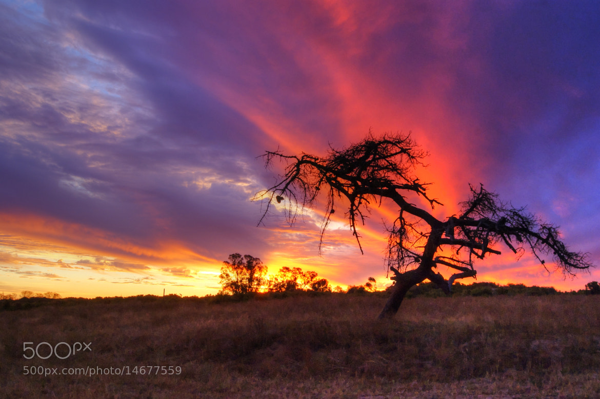 Photograph Sunset on the Farm, Velddrif, South Africa by Tim Firkins on 500px