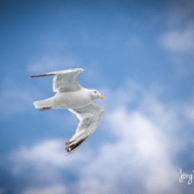 Möwe | Seagull