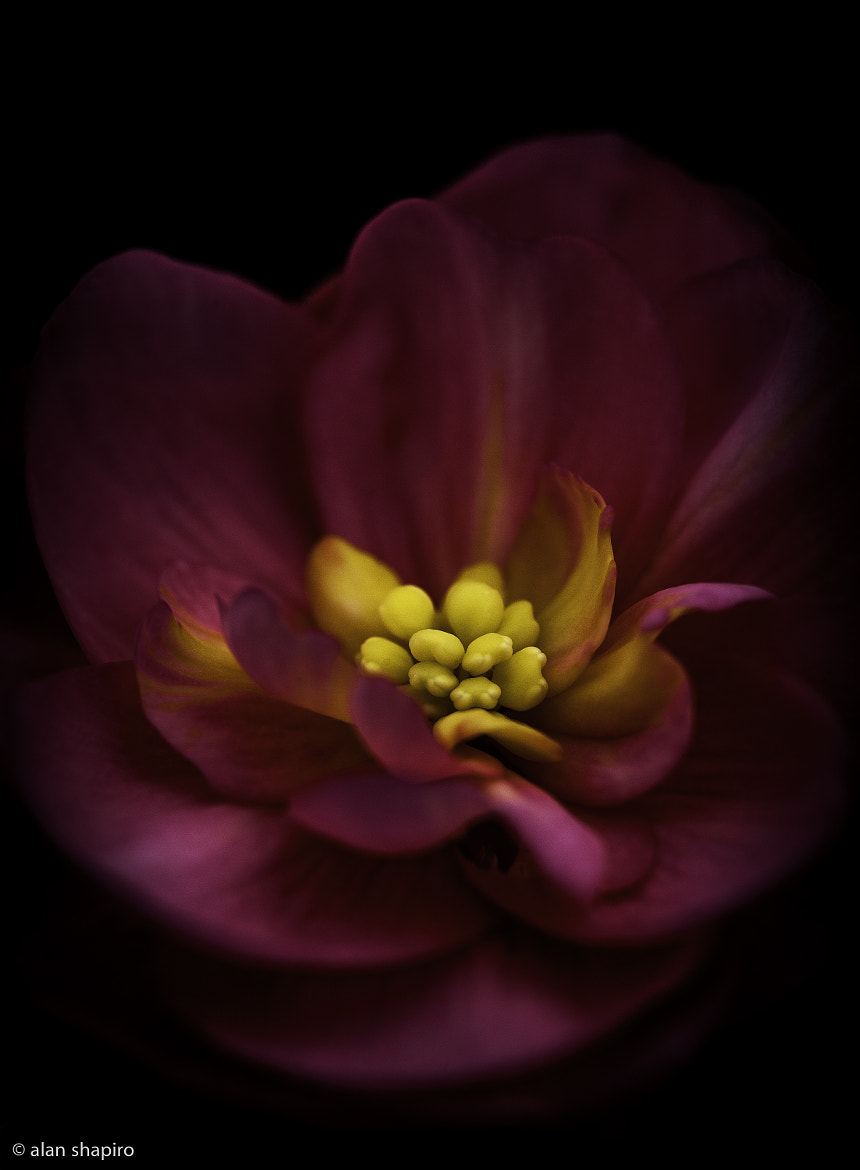 Photograph Trippin' in the Garden on Miracle Gro #184 by Alan Shapiro on 500px