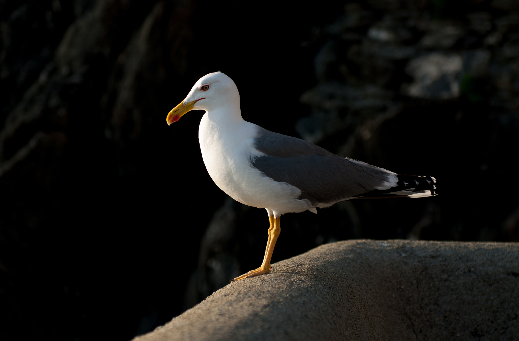 Photograph Seagull by Hubert Mical on 500px