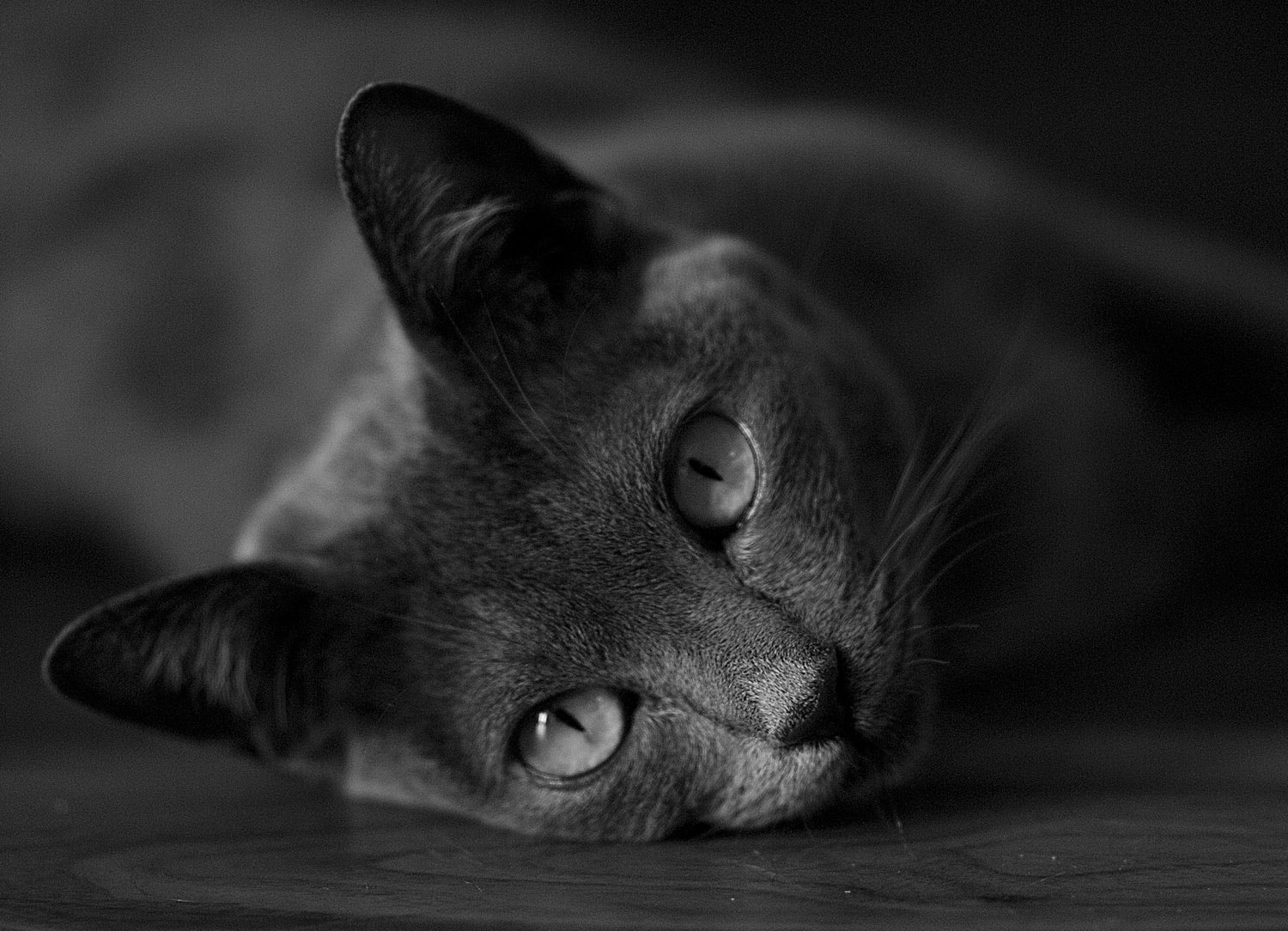 Photograph my friend the cat by Simon Norris on 500px