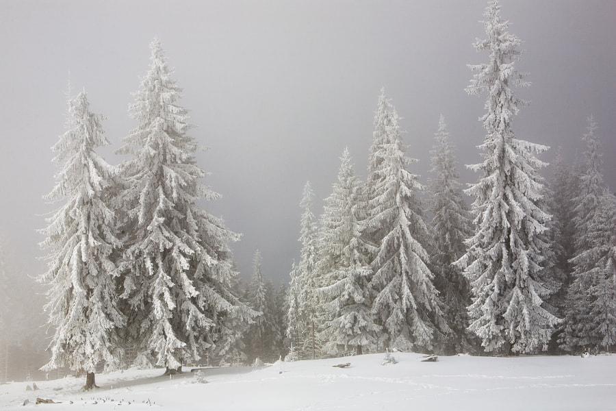 Winter in Carpathians, автор — Віталій Ра на 500px.com