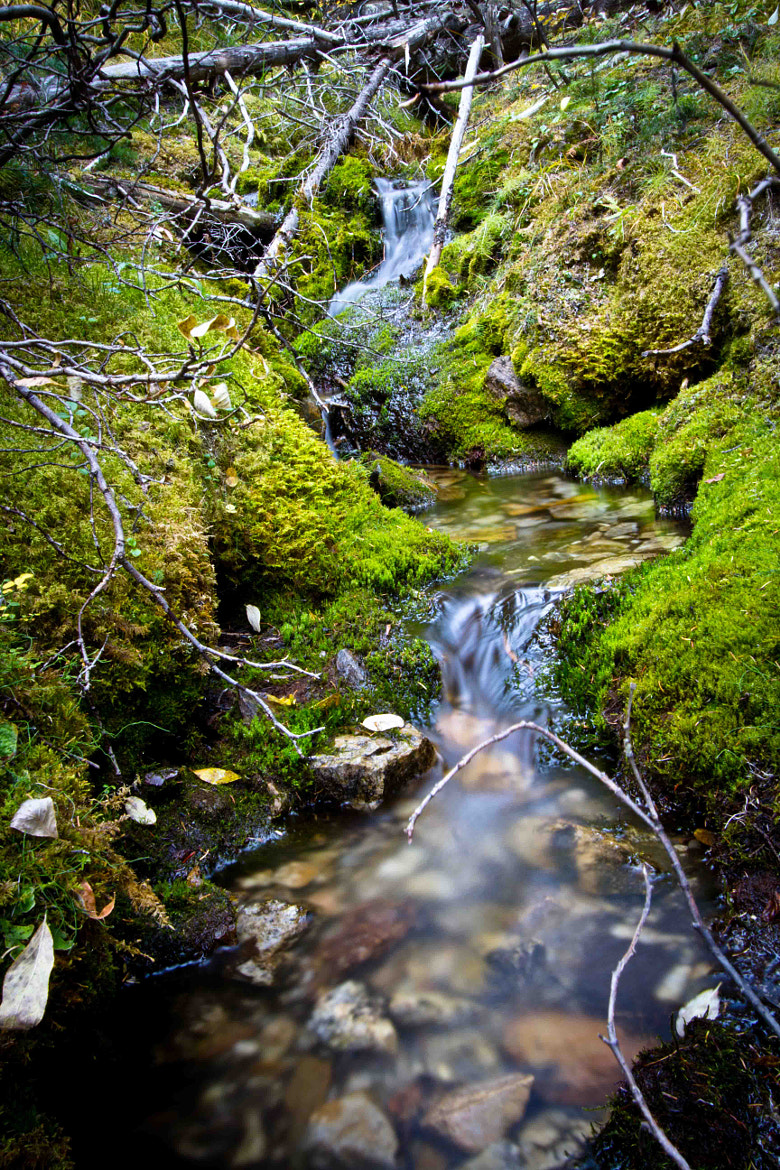 Photograph Mossy Stream by Nathan Kroeker on 500px