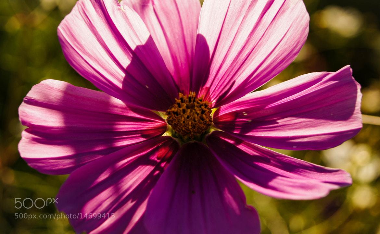Photograph Purple Pinwheel by Erik Anderson on 500px