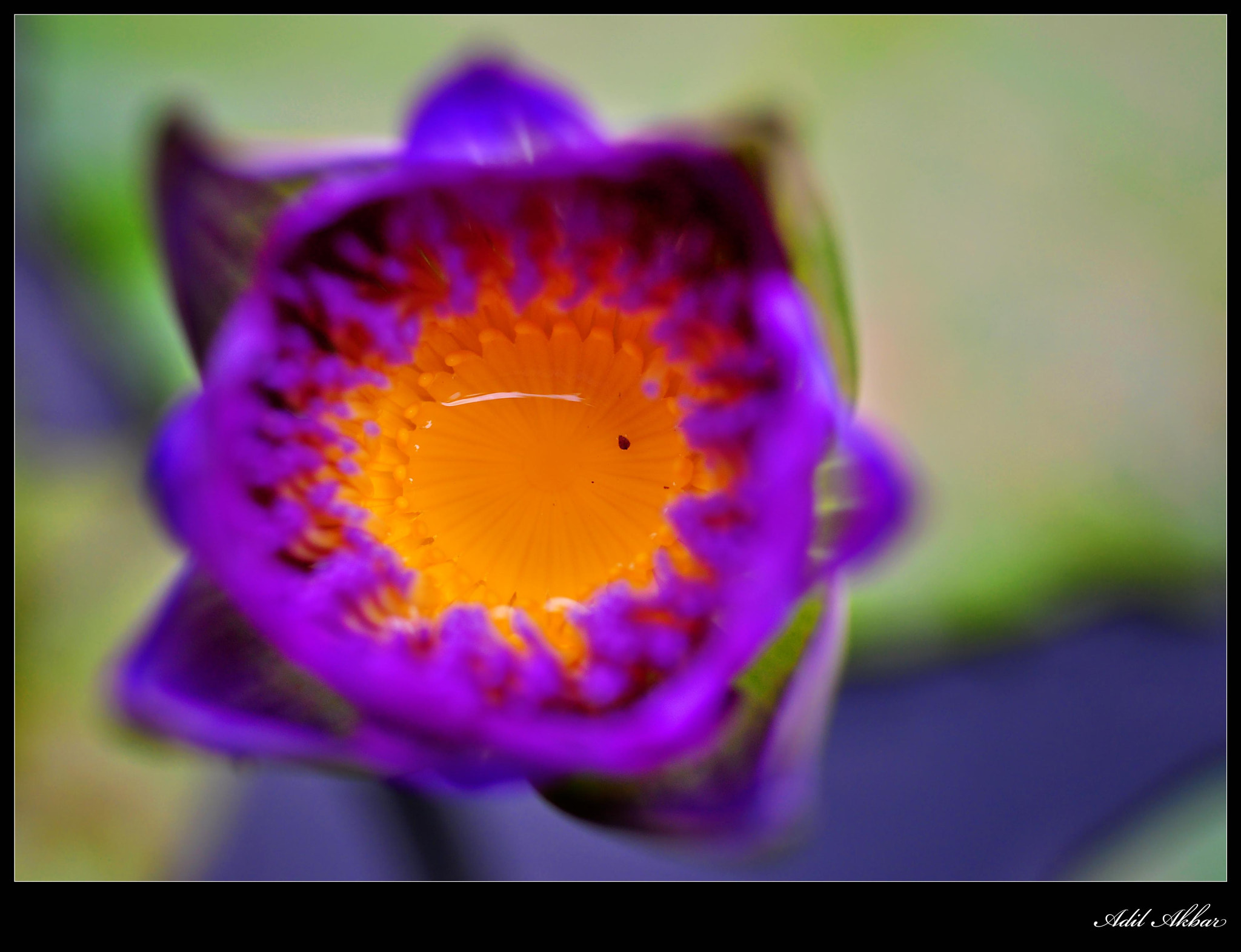 Photograph Lotus by Adil Akbar on 500px