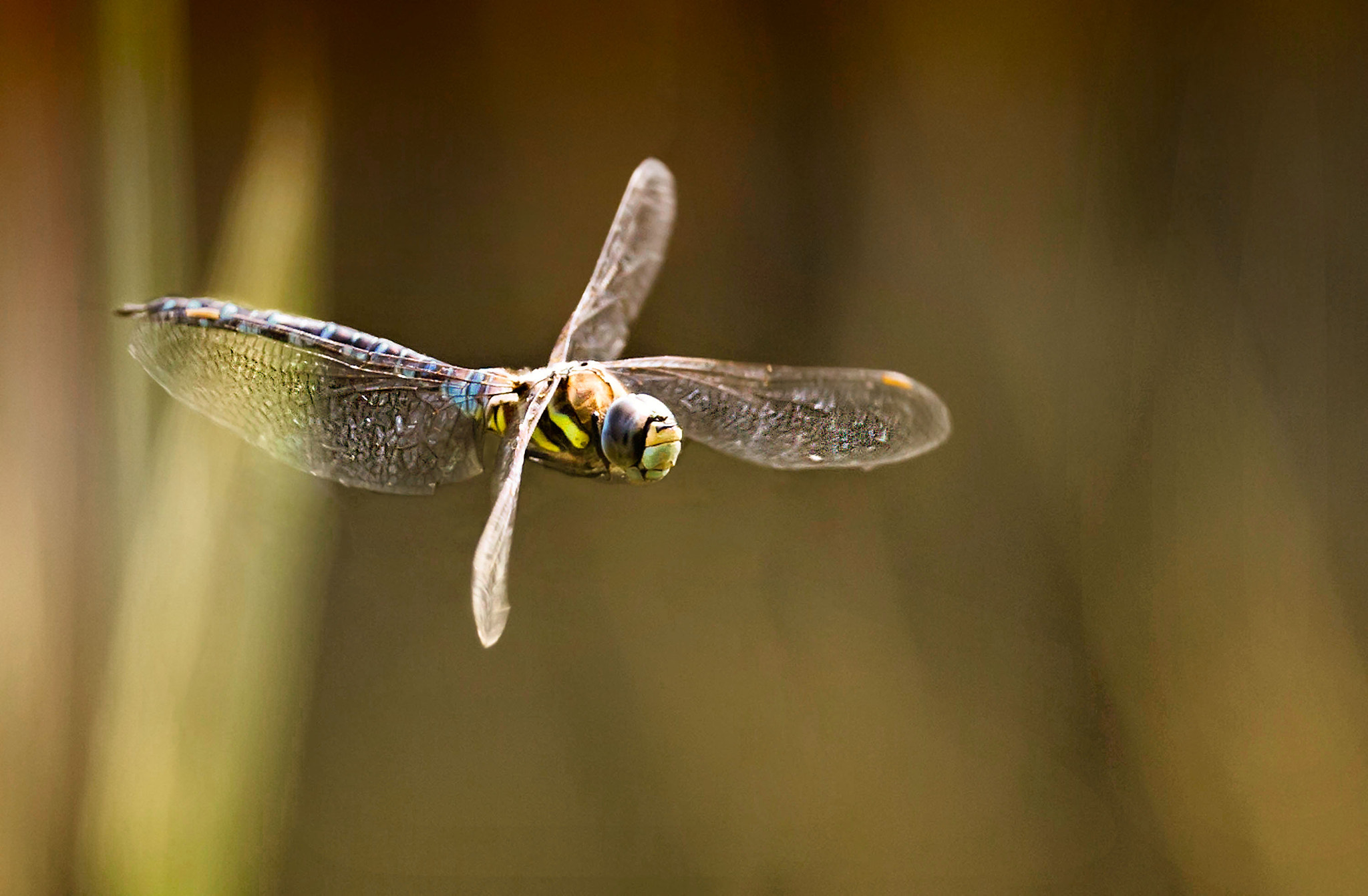 Photograph In Flight! by Sue Demetriou on 500px