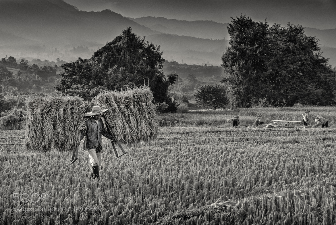 Photograph hard work by itsik madjar on 500px