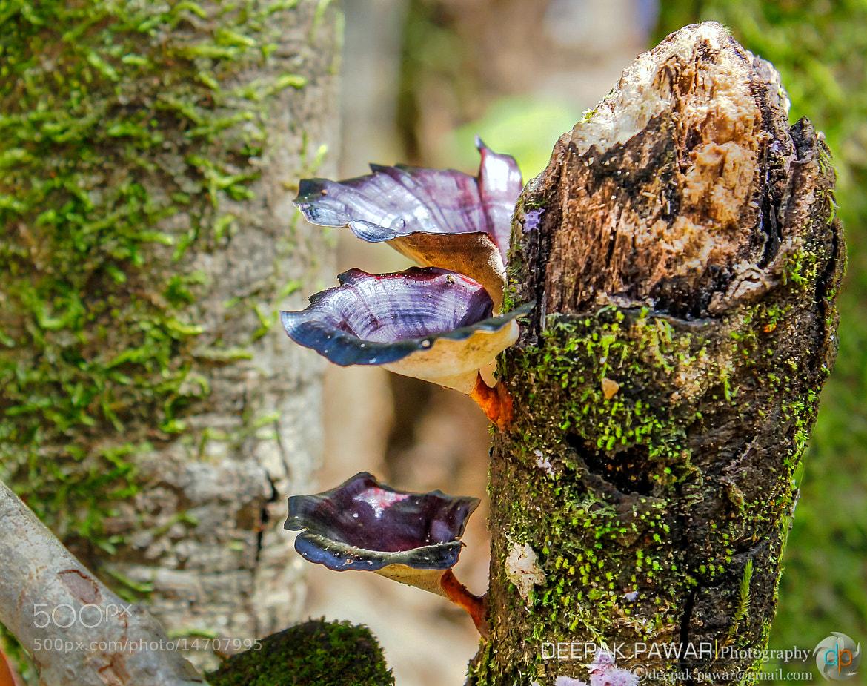 Photograph Organic bowls by Deepak Pawar on 500px