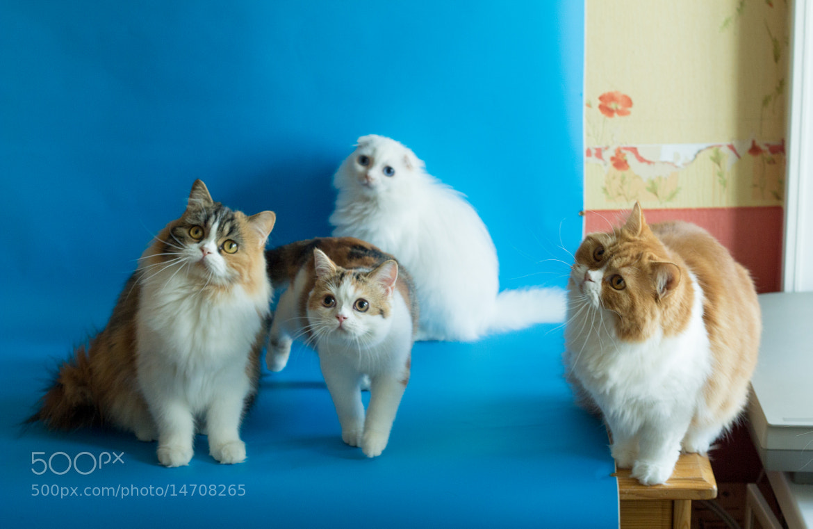 Photograph Cats by Natalie Filand on 500px
