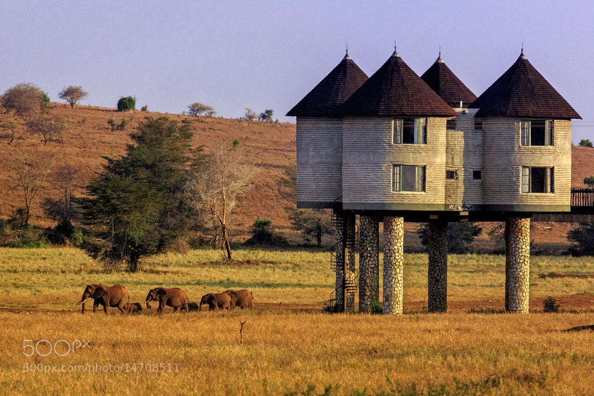 Photograph Salt Lick Hilton Lodge | Kenya by Hans K. on 500px