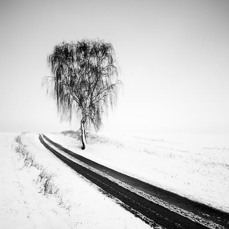 Birch by 500px on 500px