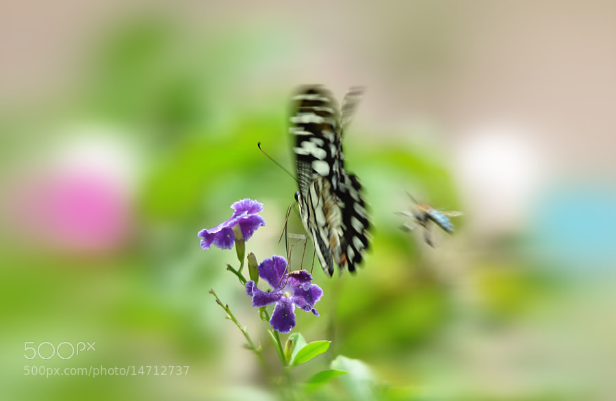 Photograph Butterfly,Bee and Flowers by Khoo Boo Chuan on 500px