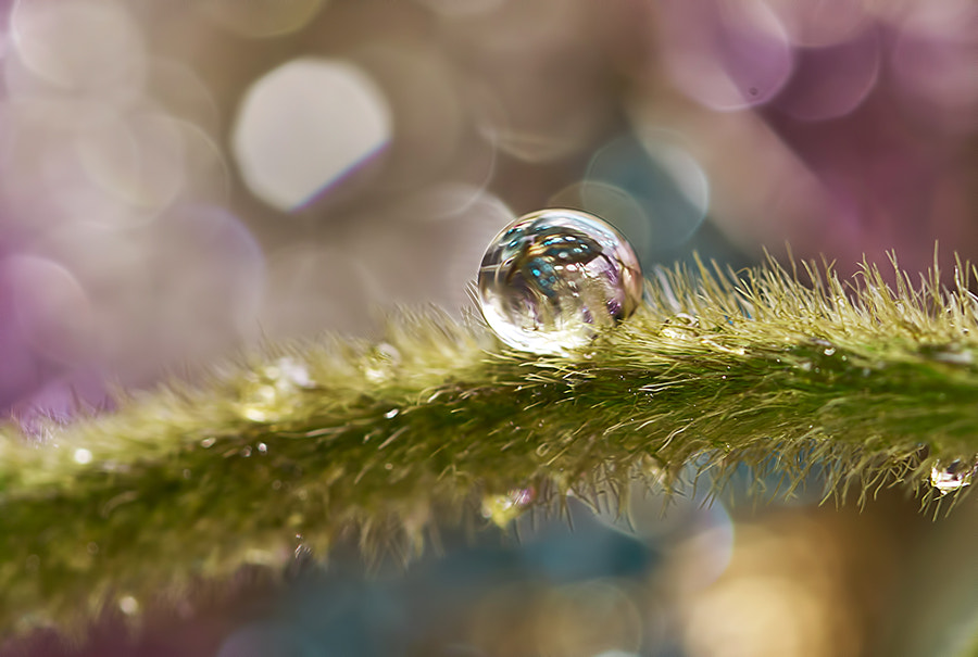 Photograph My Dew.. by Citra Hernadi on 500px