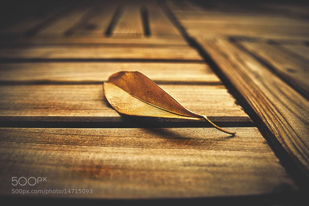Photograph autumn by Sven Becker on 500px