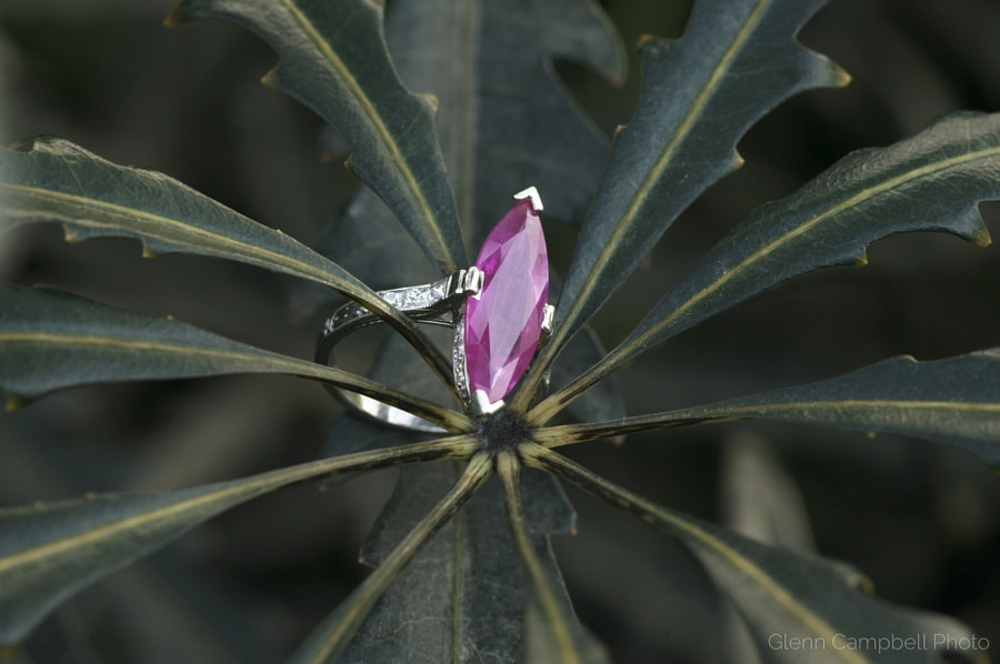 ruby ring plant wm