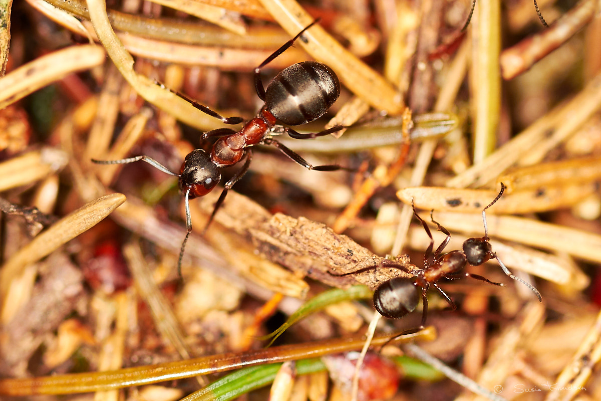 Photograph Ants by Susie Knudsen on 500px